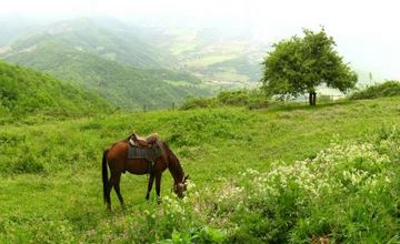 Horse Breeding in Armenia