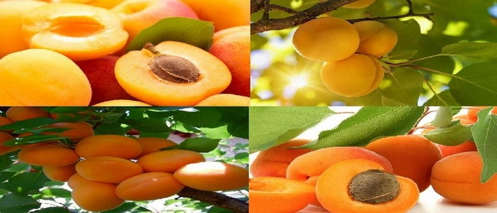 The Life-Giving Fruit