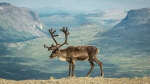 The Legend Of The Jermuk Deer